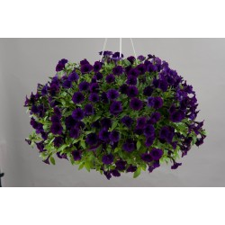 Petunia  Littletunia Purple...