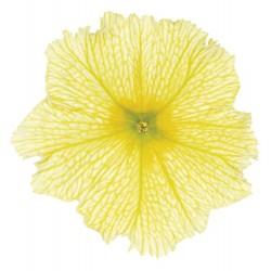 Petunia x hybrida Viva Deep...
