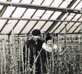 Gospodarstwo Ogrodnicze Zielińscy